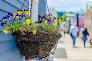 Quaint hanging baskets of Fisherman's Wharf