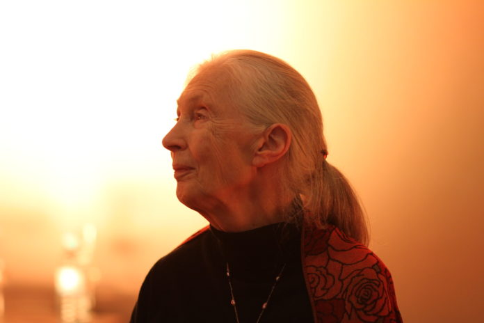 Jane Goodall is coming to Victoria